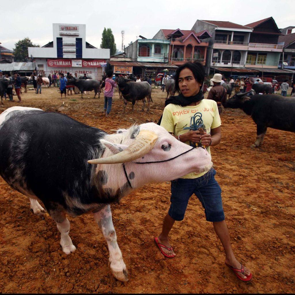 Bulog Jual Daging Kerbau India Rp 65.000/Kg