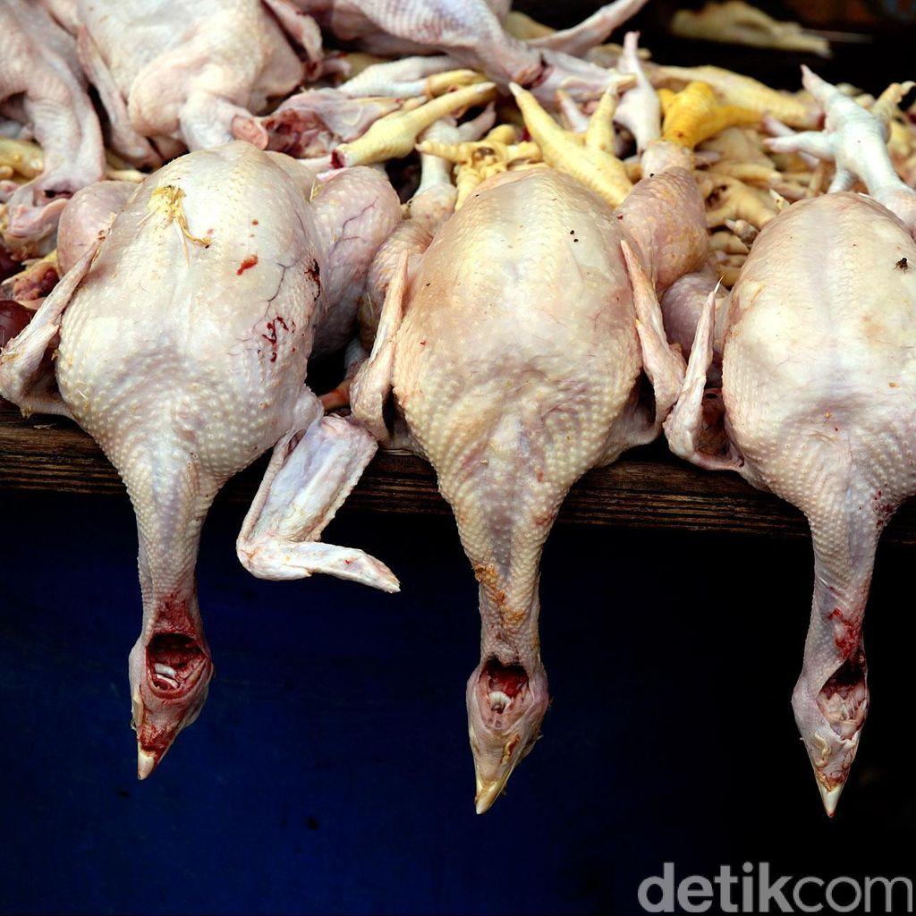 Harga Ayam Turun, Konsumen Malah Berkurang