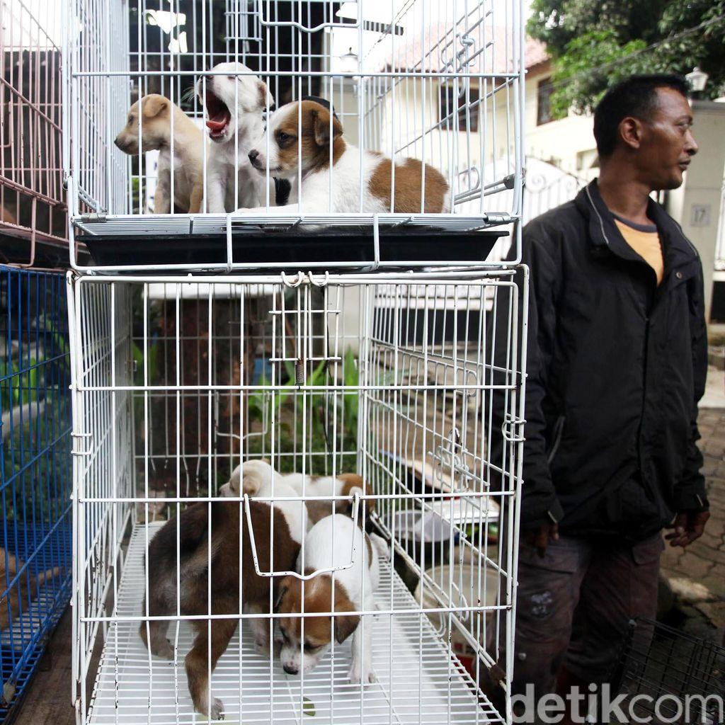 Kasus Rabies di Kalbar Kejadian Luar Biasa, Pemprov Minta Bantuan BNPB