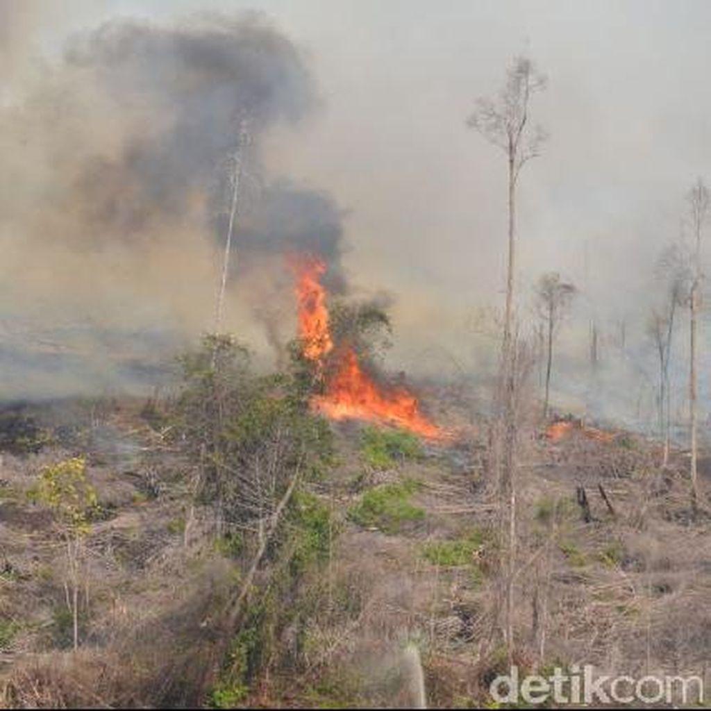 BNPB: Kebakaran Lahan dan Hutan di RI karena Ulah Manusia