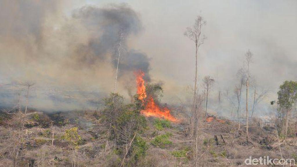 Kebakaran Hutan di Gunung Slamet Berhasil Dipadamkan