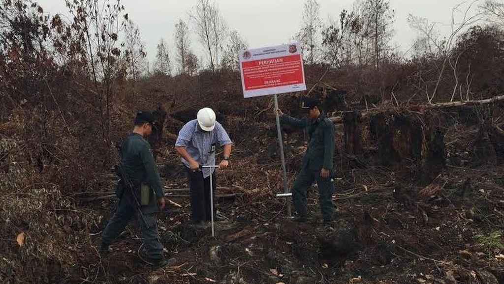 Ini Kendala Pemadaman Kebakaran Hutan di Sumatera dan Kalimantan
