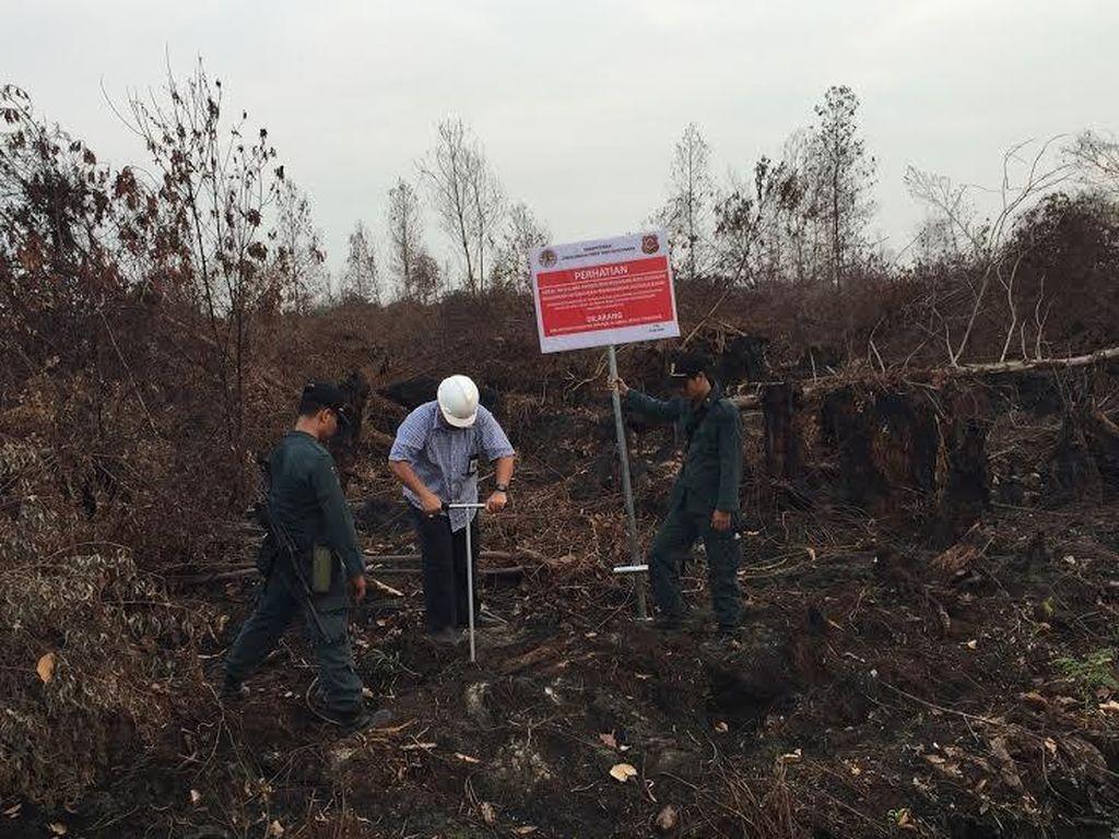 Jokowi Prioritaskan 4 Program Atasi Bencana Asap di Sumatera dan Kalimantan