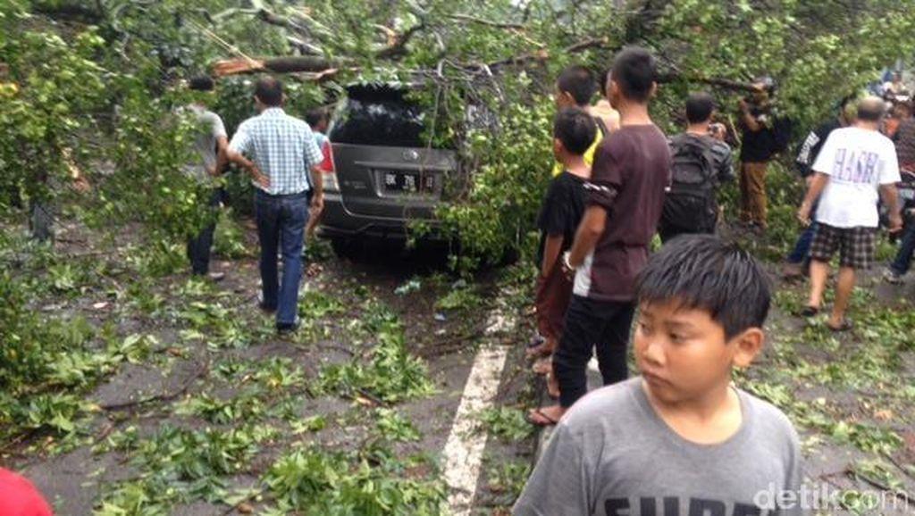 Hujan dan Angin Kencang di Medan, 2 Mobil Tertimpa Pohon Beringin