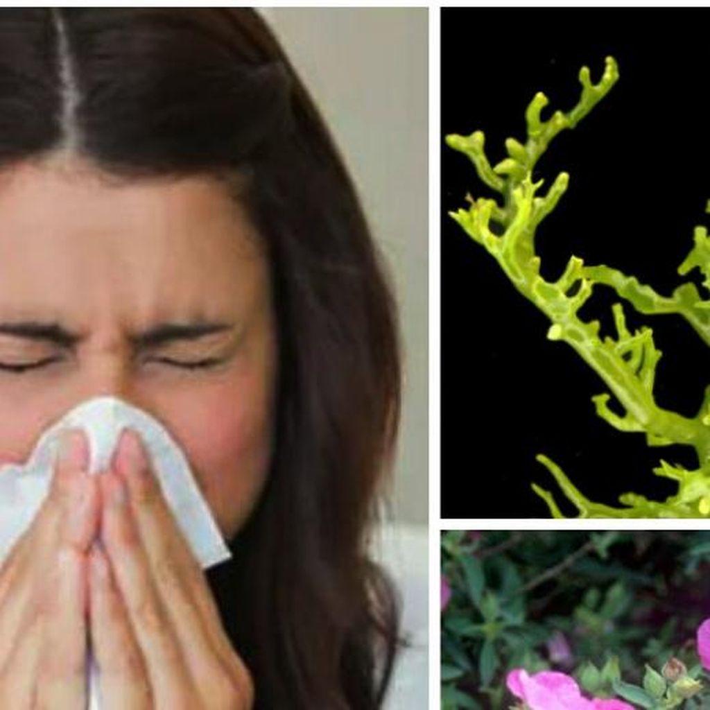 Dua Tumbuhan Ini Ternyata Ampuh Tangkis Virus Flu