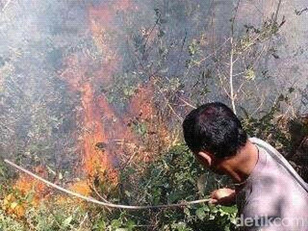 Gunung Lawu Terbakar, Puluhan Hektar Pohon Pinus di Ngawi Ludes