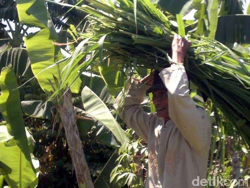 10 Tahun Menabung, Pencari Rumput Ini Akhirnya Berangkat Haji