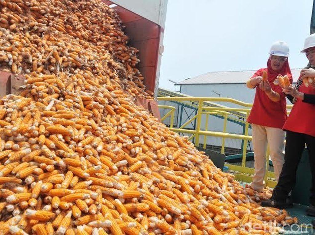 Produksi Benih Jagung Digenjot Seiring Kebutuhan Pakan Ternak