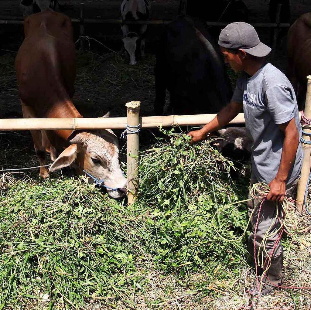 Pemkot Bandung Larang Pedagang Hewan Kurban Berjualan di Trotoar dan Taman