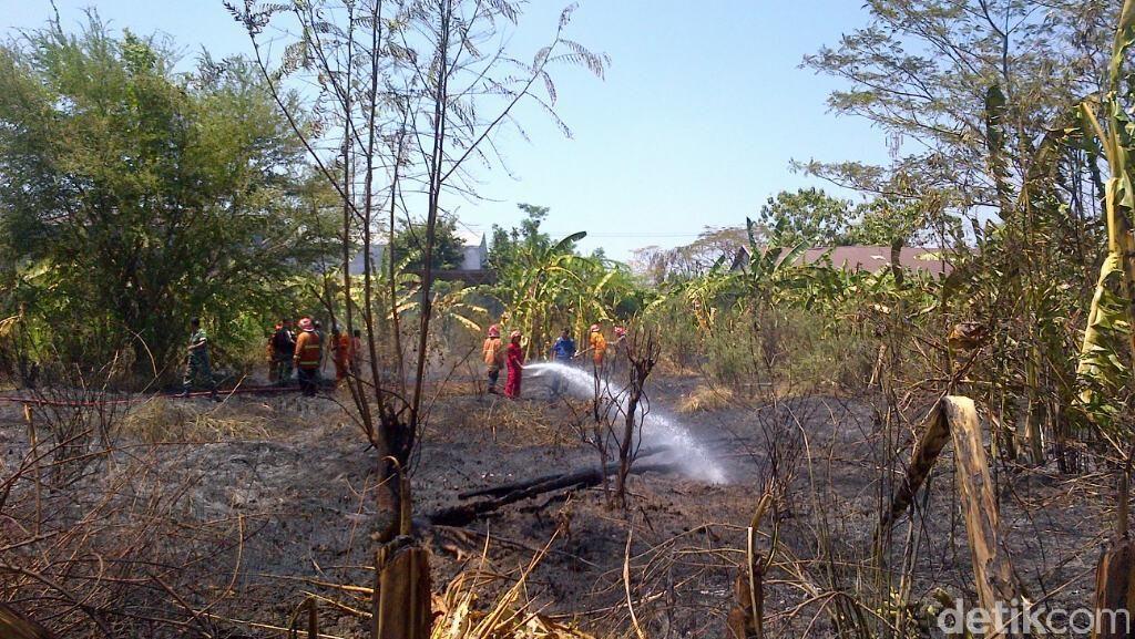 Kebakaran Alang-alang Hebohkan Pegawai Kantor Pemerintahan di Semarang