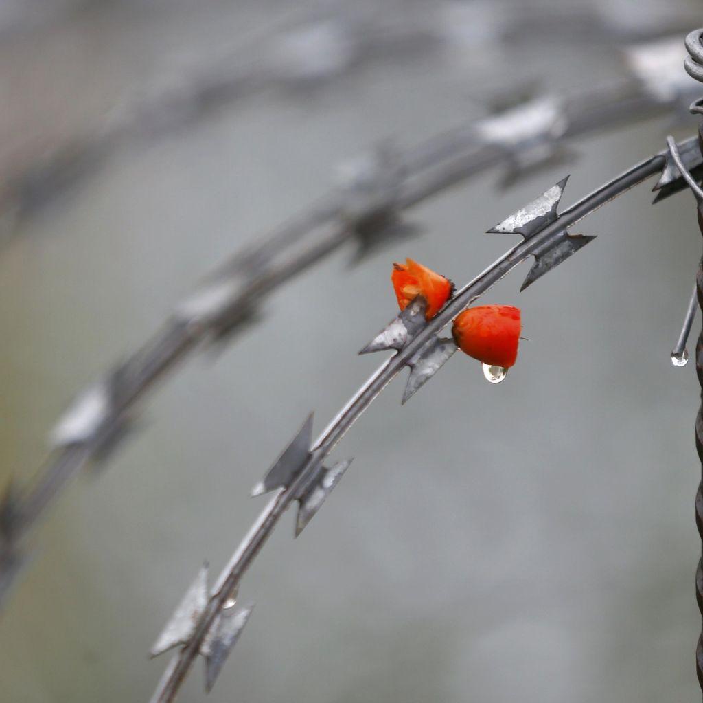 Bawa 15 Kg Peledak dan Rompi Bom Bunuh Diri, 34 Orang Ditahan di Turki