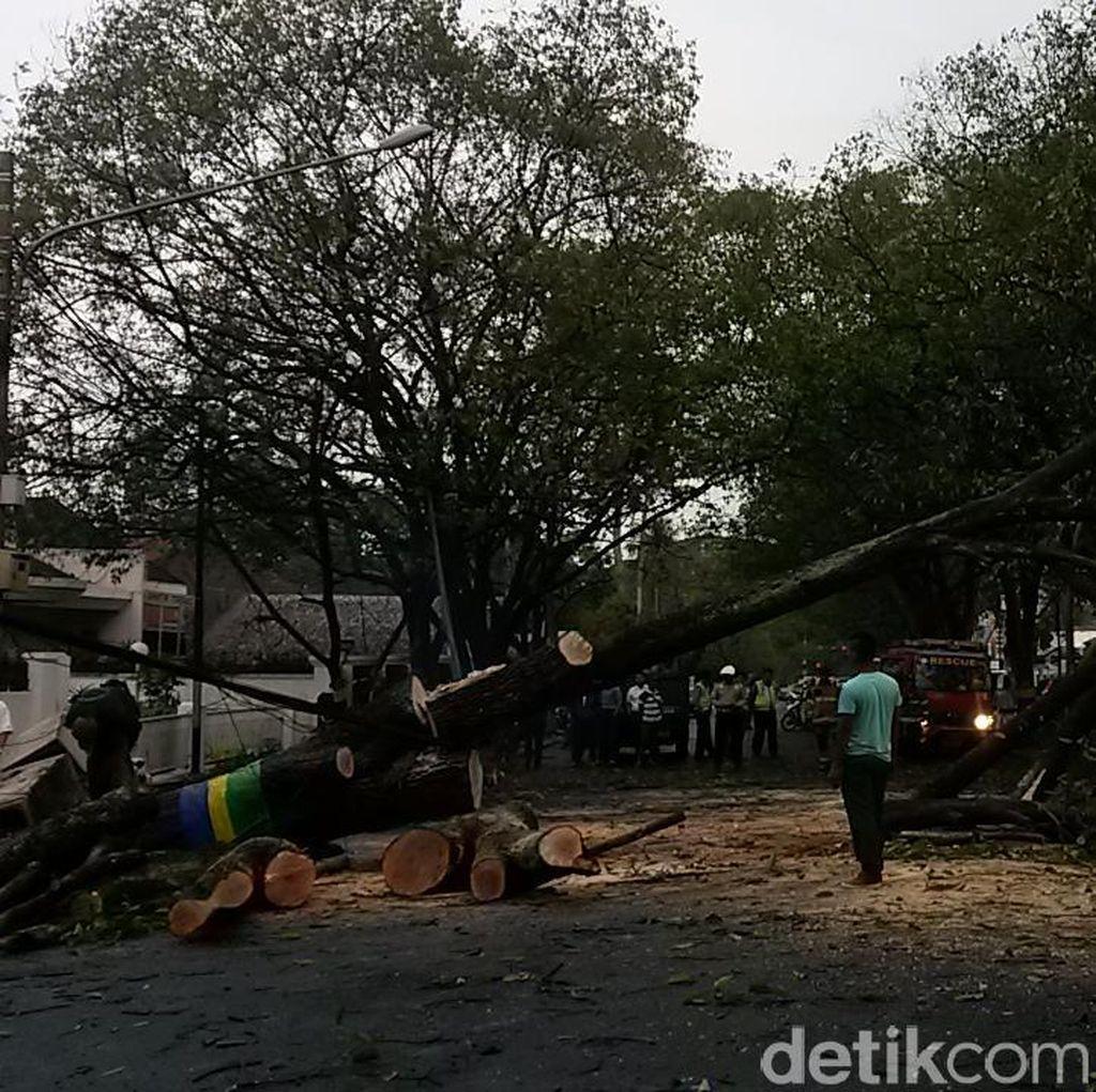 Ridwan Kamil Perintahkan Dinas Taman Catat Usia Pohon di Bandung