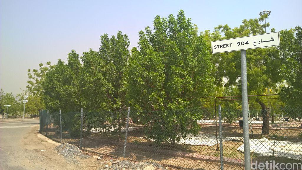 Hamparan Hijau di Tempat Wukuf, Ke Mana Arafah yang Dulu?