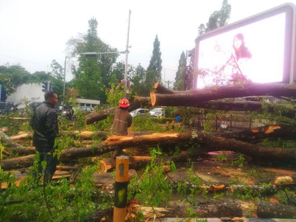 Pohon di Bandung Nanti Punya KTP