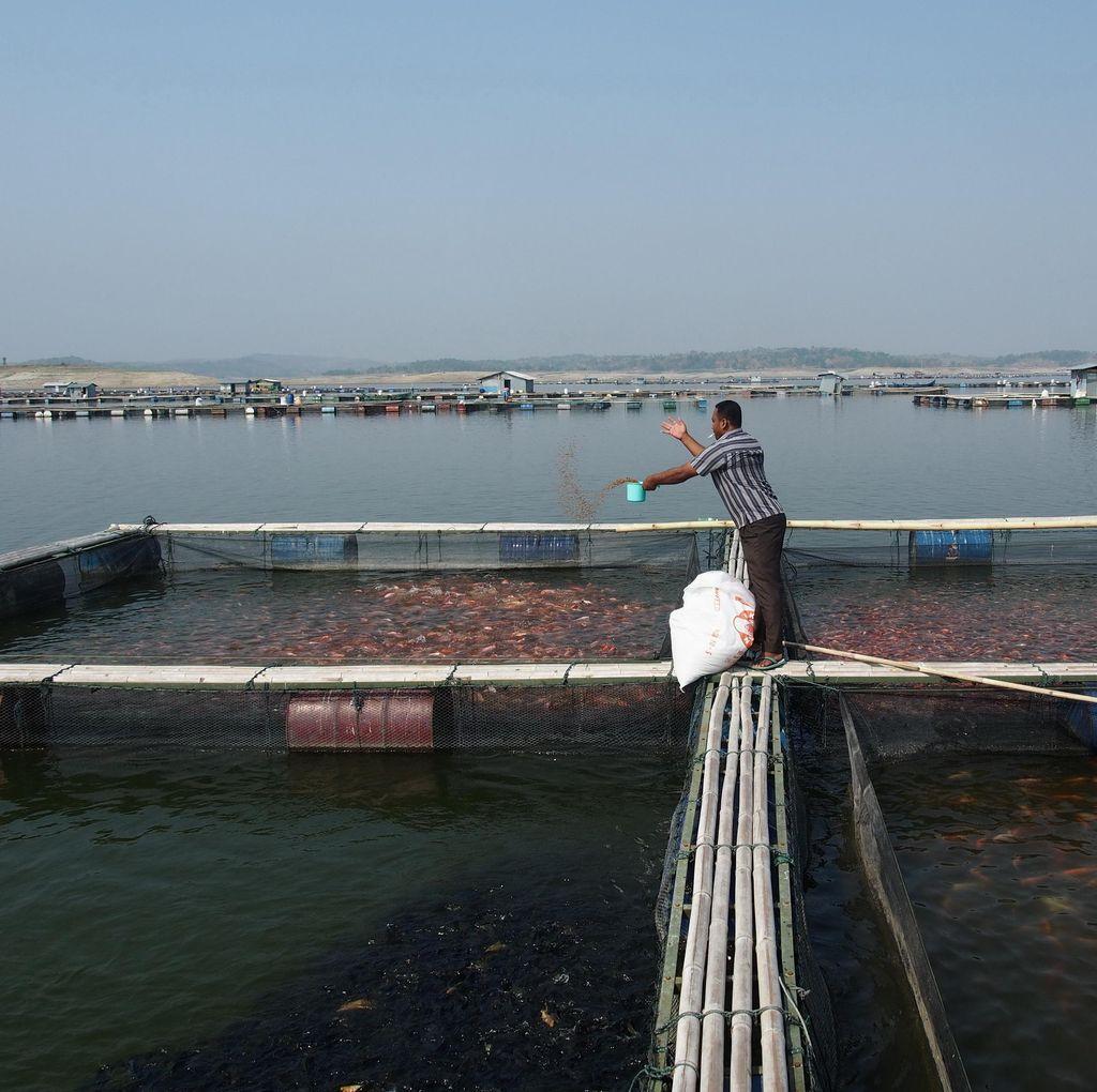 Air Waduk Kedungombo Makin Susut, Karamba Ikan Tandas