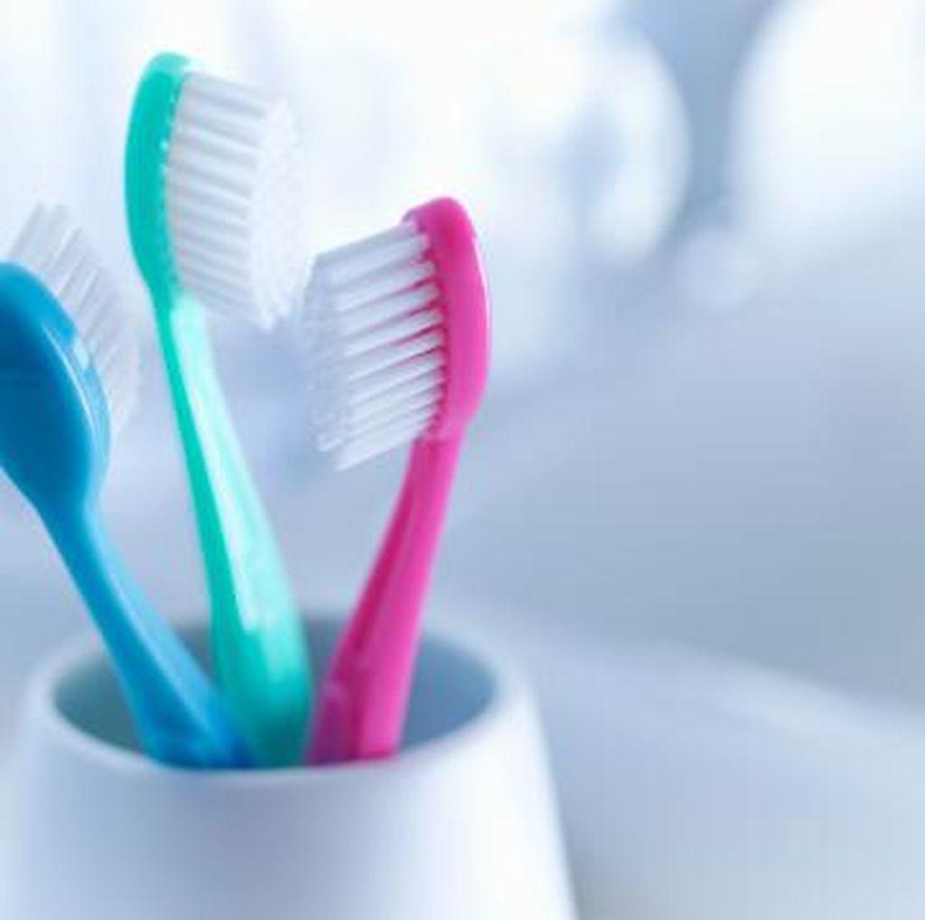 Jangan Malas! Jarang Ganti Sikat Gigi, Juga Bisa Picu Bau Mulut