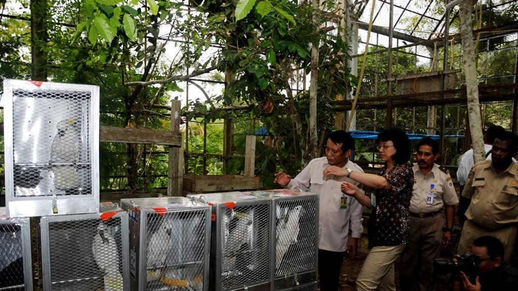 Selain ke Papua, Si Jambul Kuning Juga akan Dikembalikan ke Kepulauan Maluku
