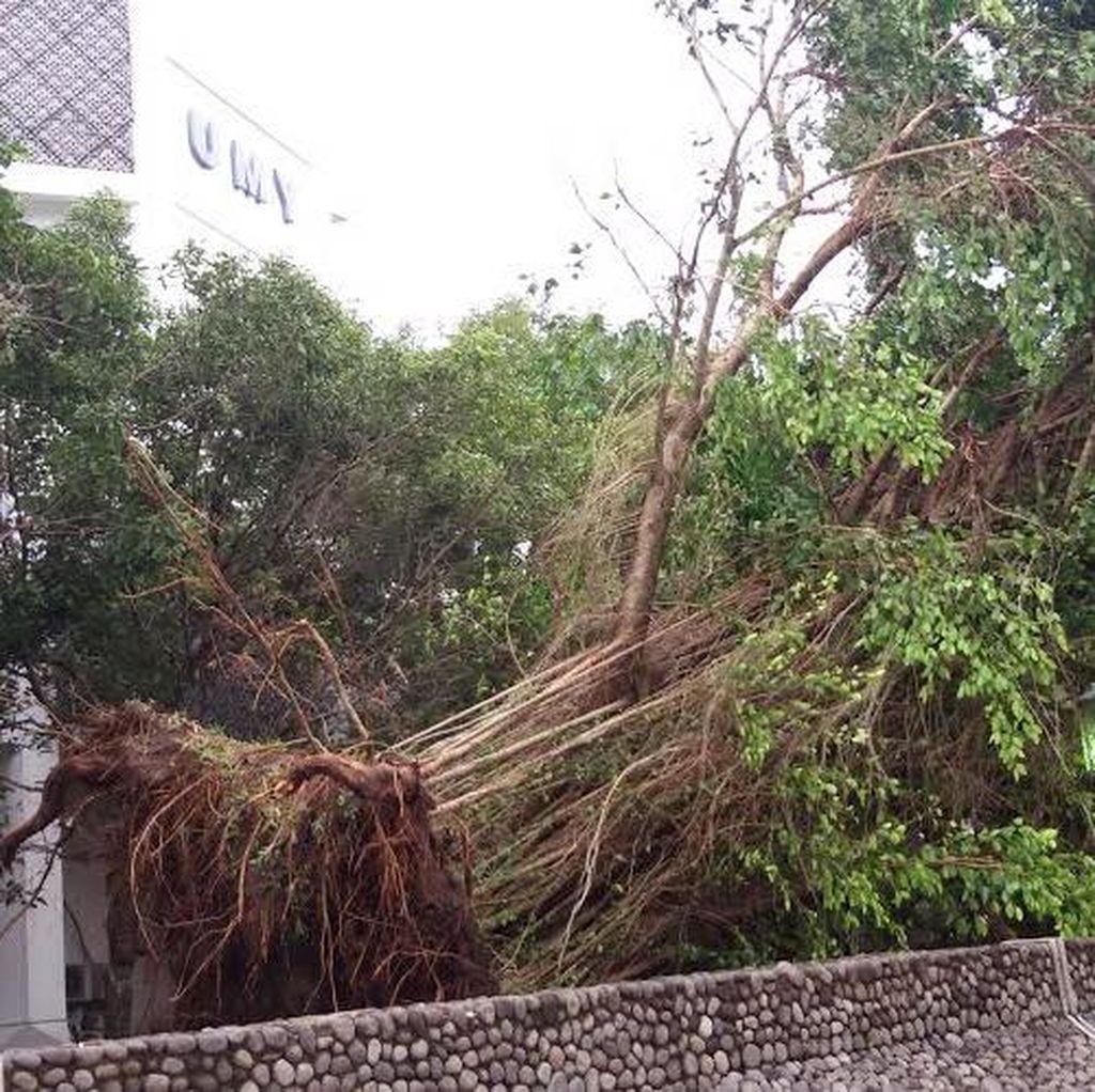 Pohon Bertumbangan di Bantul, Sejumlah Rumah Rusak dan Satu Orang Terluka