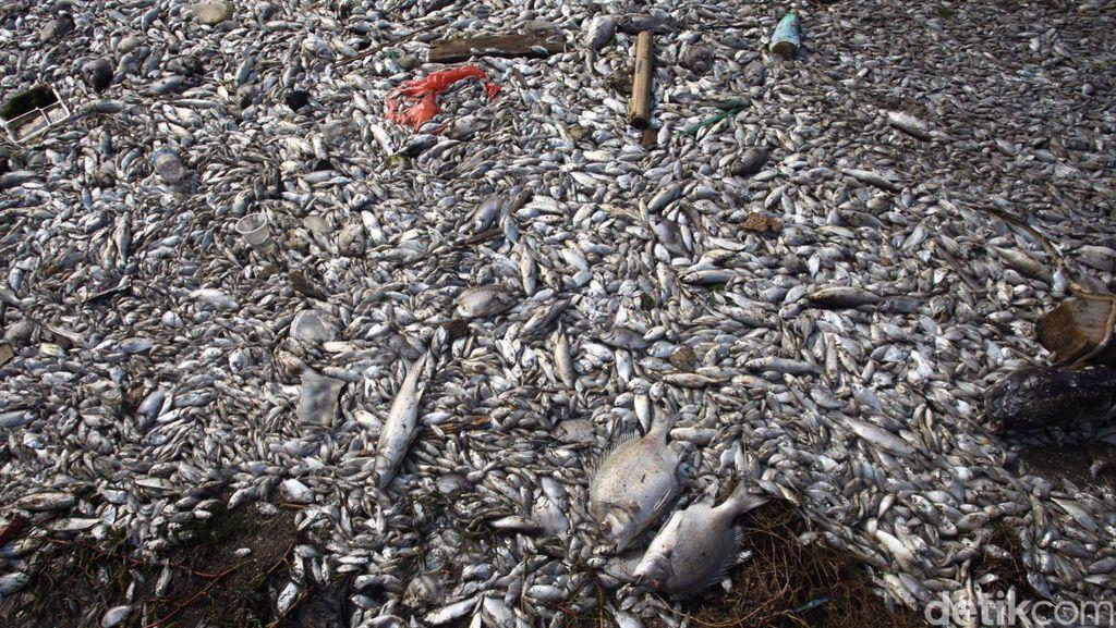 Mengerikan! Ini Penampakan Pencemaran Sungai di Jakarta