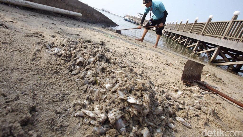 Kepala BPLHD Ambil Sampel Air yang Sebabkan Jutaan Ikan Mati di Ancol