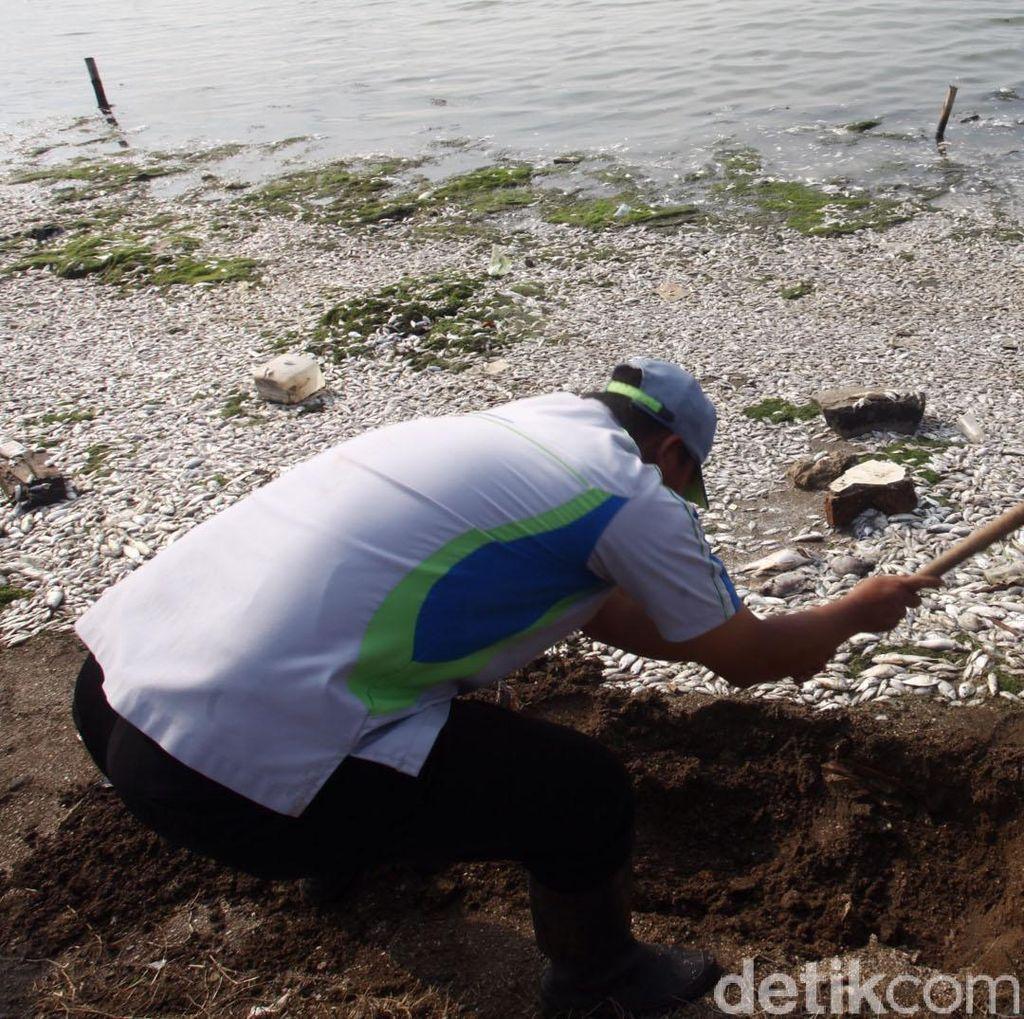 LIPI: Ada 13 Sungai Bermuara di Pantai Ancol, Bisa Bawa Banyak Bakteri