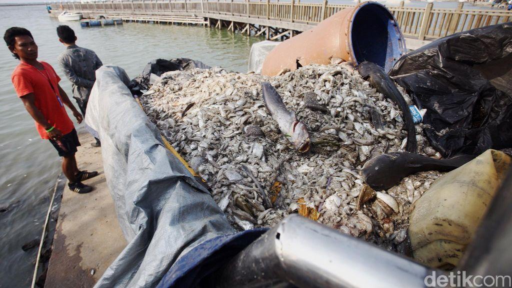 Jutaan Ikan Mati di Ancol Kemungkinan Karena Blooming Algae, Bukan Logam Berat