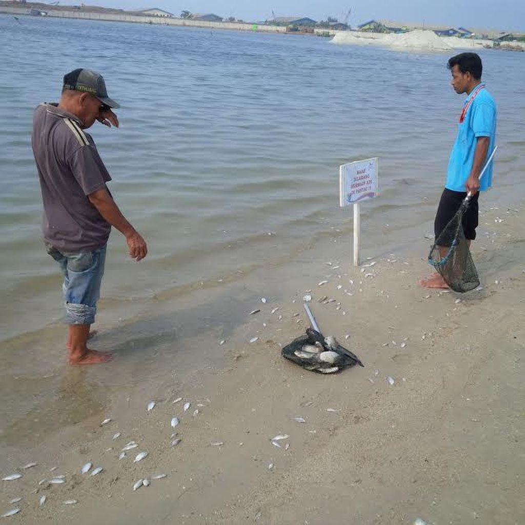 Banyak Ikan Mati, Pengunjung Ancol Diimbau Tak Berenang Dahulu