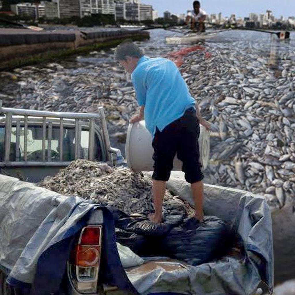 Hasil Uji Lab Ikan Mati di Ancol Keluar 2 Minggu Lagi