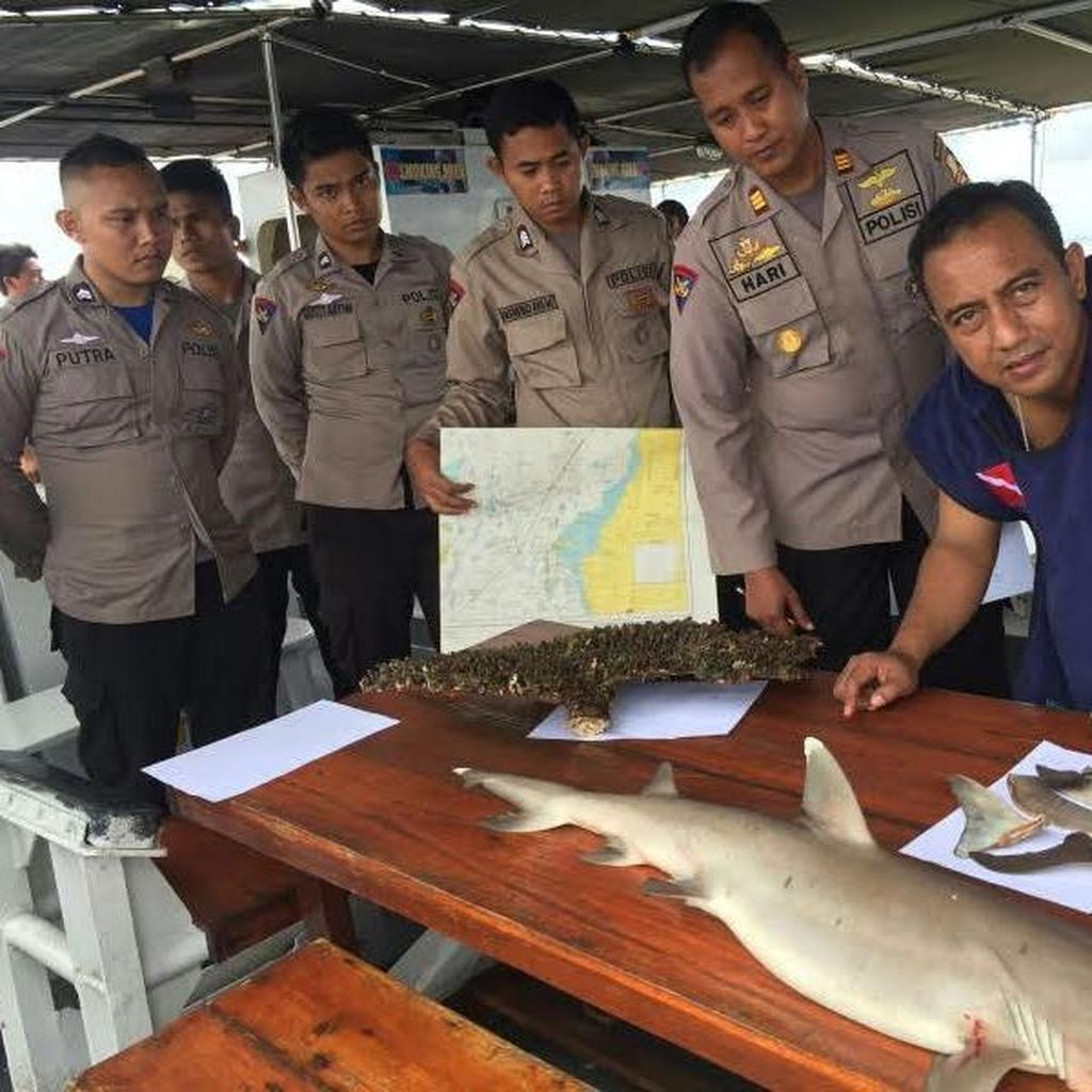 Polisi Cokok Nelayan yang Menangkap 17 Ekor Ikan Hiu di Perairan Pangkep