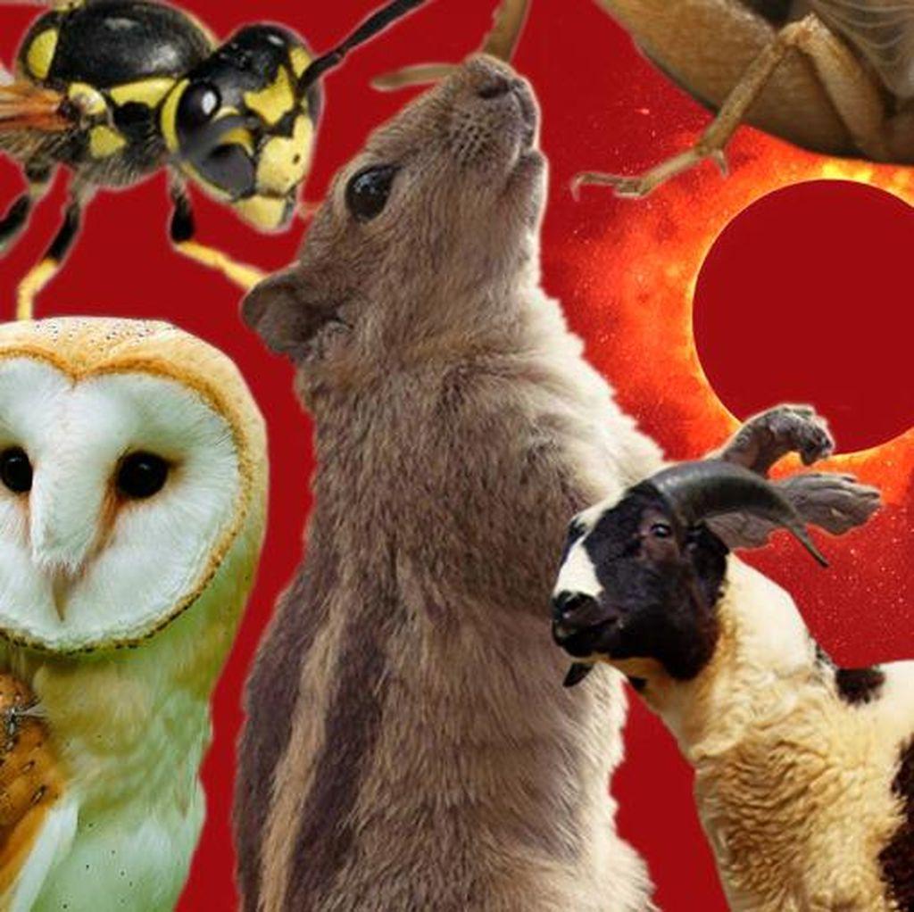 Dari Jangkrik Hingga Lebah, Begini Perilaku Hewan Saat Gerhana Matahari
