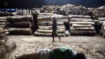 Gubernur Papua Lepas 40 Kontainer Ekspor Kayu Perdana