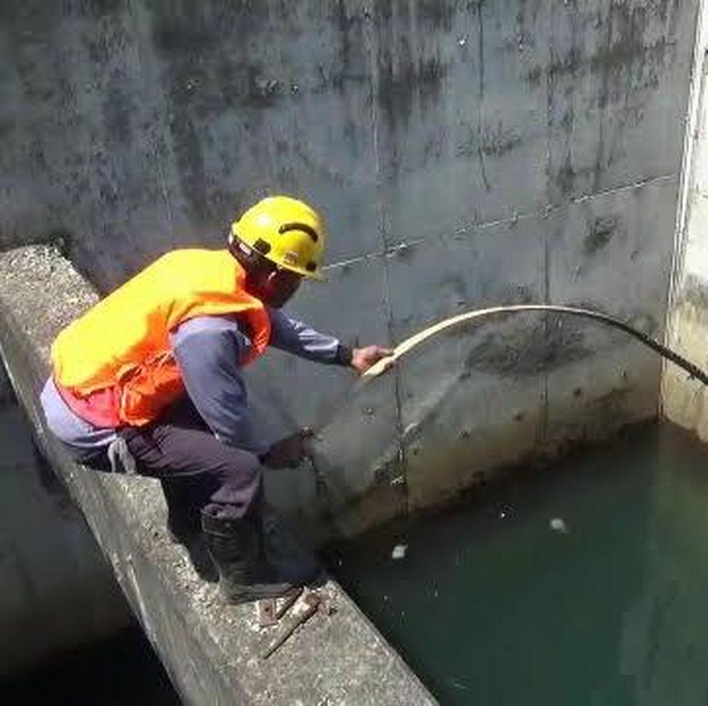 Hindari Pemadaman Listrik Terus Berlangsung, PLTU Paiton Terjunkan Penyelam Bersihkan Ubur-ubur