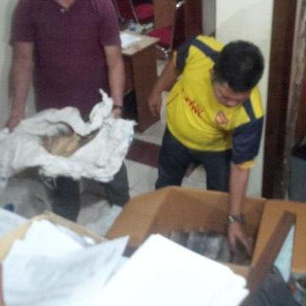 Kulit Harimau dan Beruang yang Diamankan Polisi Diduga akan Dijual ke Luar Negeri