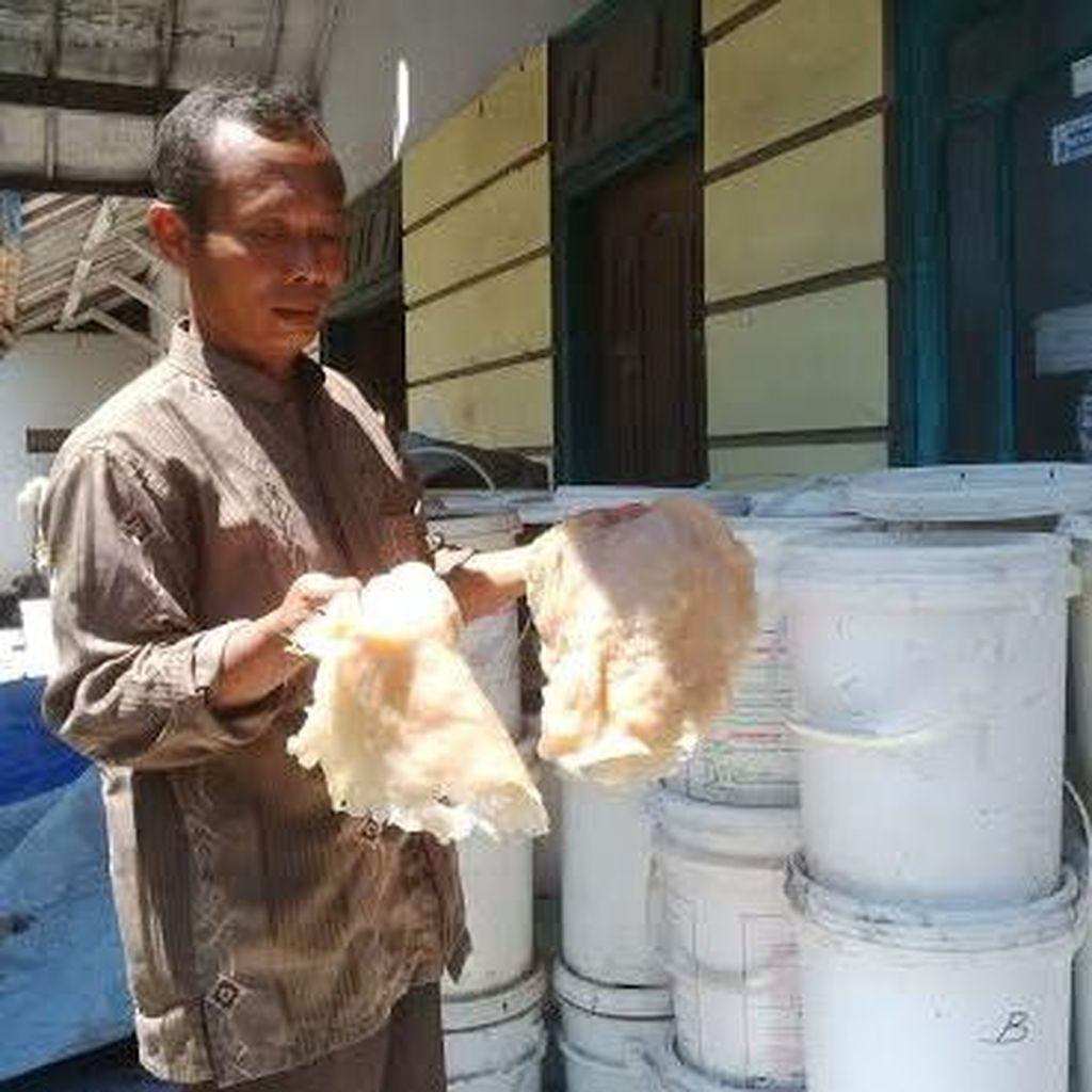 Ubur-ubur di Perairan Probolinggo Bisa Dikeringkan dan Diekspor