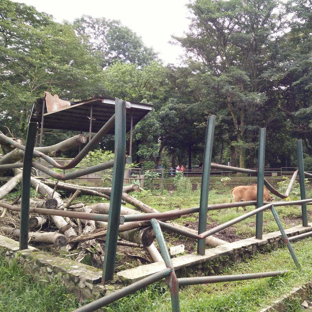 Kondisi Kebun Binatang Bandung Saat Ini, Banyak Kandang Rusak dan Kotor