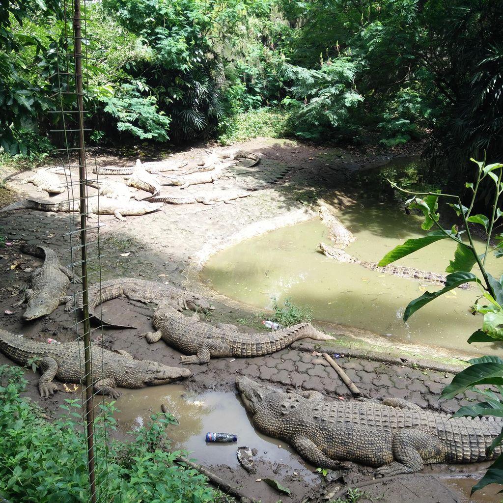 Ini Kata Pengelola Kebun Binatang Bandung Soal Kandang Kotor dan Rusak