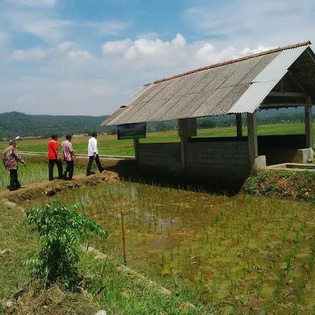 Presiden Jokowi Tinjau Irigasi Hasil Dana Desa di Banyumas