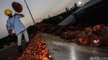 RI Lebih Sering Kebakaran Lahan Gambut Dibanding Malaysia, Ini Sebabnya