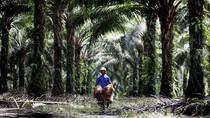 BUMN Perkebunan Pangkas Jumlah Komisaris dari 62 Jadi 41 Orang