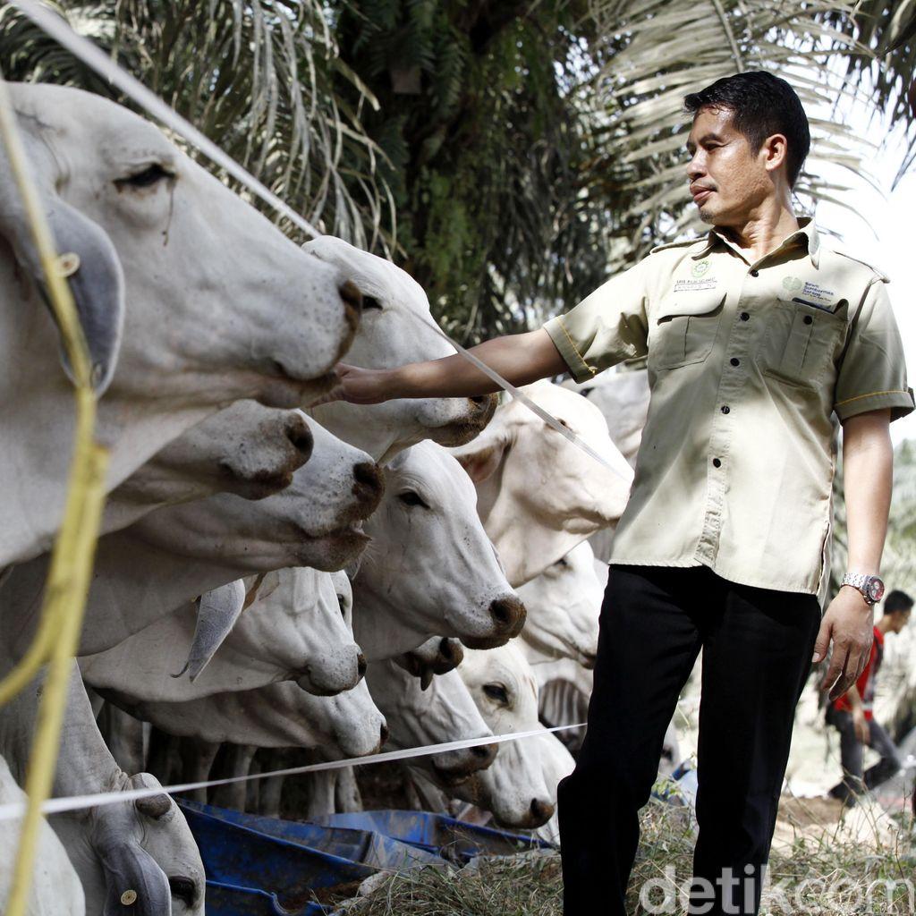 RI Impor Daging 10.000 Ton, Mentan: Sudah Saya Teken Rekomendasinya