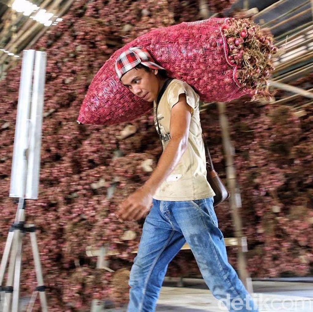 Harga Bawang Merah Tinggi, Pemerintah Mau Impor