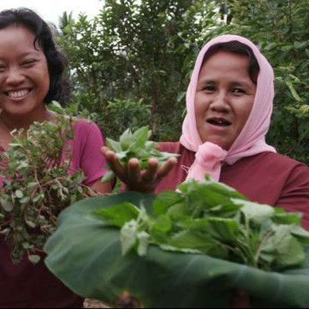 Ibu-ibu Dusun di Jombang Jatim ini Olah Tanaman Liar Jadi Pangan Bergizi