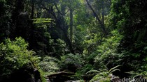 Bank Dunia Hibahkan Rp 297 M untuk Pengelolaan Hutan RI