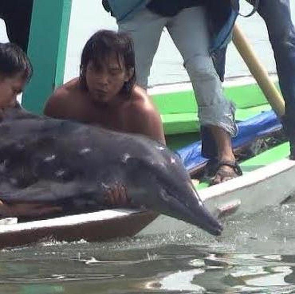 Dianggap Pulih, Lumba-lumba yang Terdampar di Nambangan Dilepas ke Laut