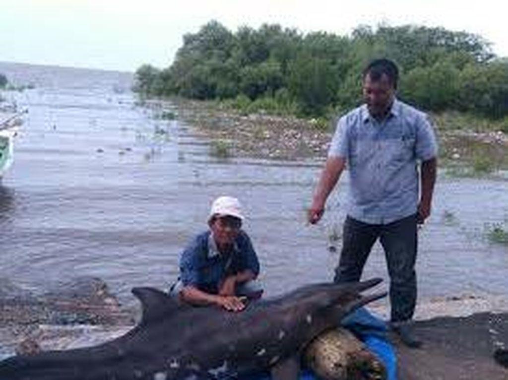 Lumba-lumba Terdampar di Nambangan Ditemukan Mati