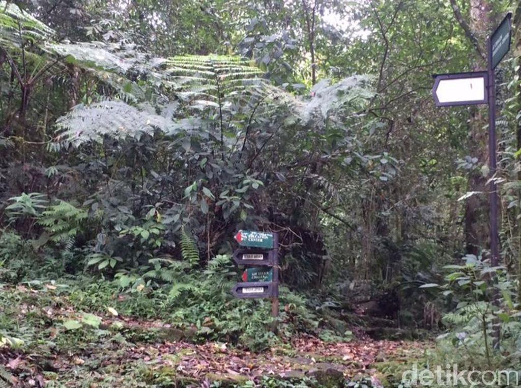 Populasi Macan Tutul di Taman Nasional Gede Pangrango Tersisa 32 Ekor