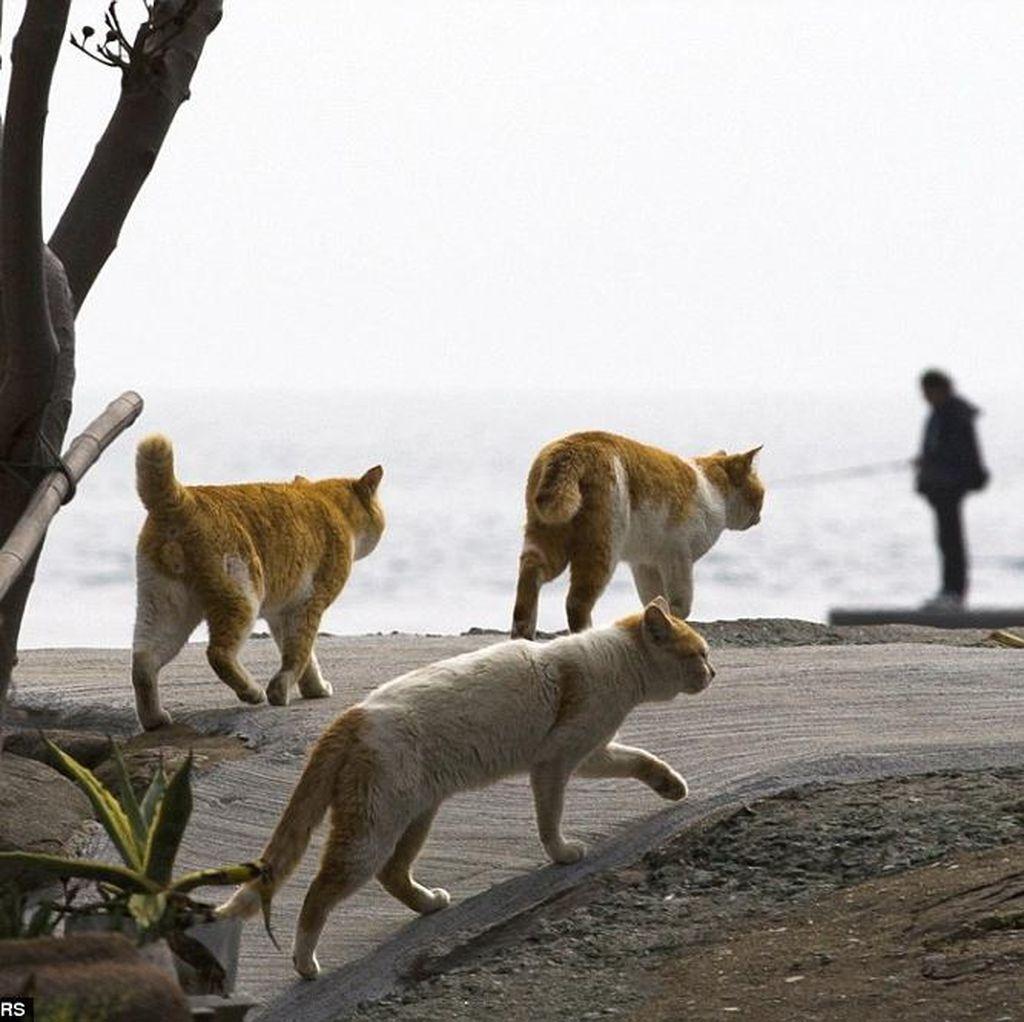 Berpotensi Tularkan Toksoplasma, Pelihara Kucing Bisa Bikin Wanita Mandul?