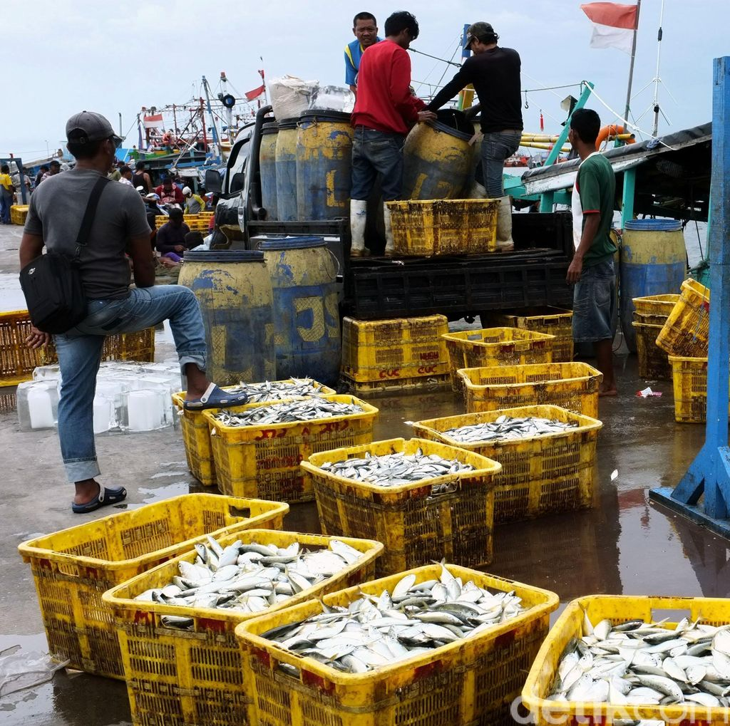 Ini Ikan yang Paling Banyak Dikonsumsi Orang Indonesia