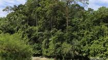 Zaman Orde Baru 1 Juta Hektar Hutan Dibabat untuk Sawah, Tapi Terlantar