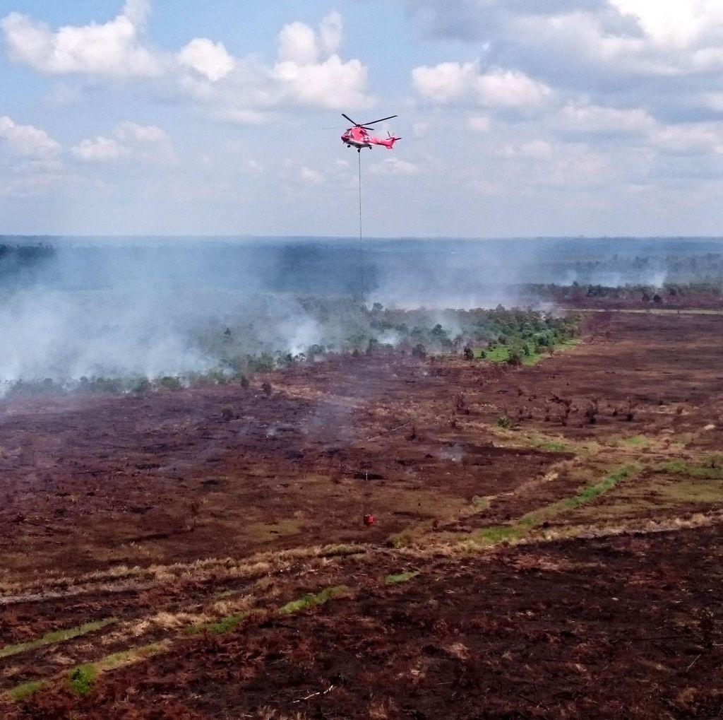 Hujan Merata dan Pemadaman Rutin, Kualitas Udara di Riau Membaik